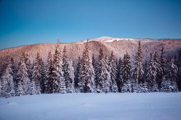壁紙(ウォールミューラル) - Magical white spruces on a frosty day. Location Carpathian mountain, Ukraine, Europe.
