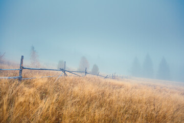 Wall Mural - Beautiful moody landscape of the foggy field. Location place Carpathian mountains, Ukraine, Europe.