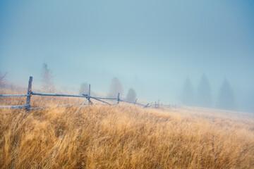 壁紙(ウォールミューラル) - Beautiful moody landscape of the foggy field. Location place Carpathian mountains, Ukraine, Europe.