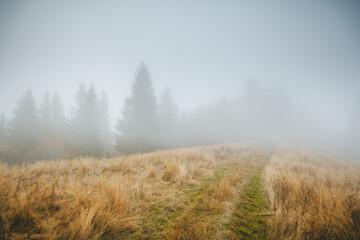 Wall Mural - Beautiful moody landscape of the foggy field. Location place Carpathian mountains, Ukraine, Europe.