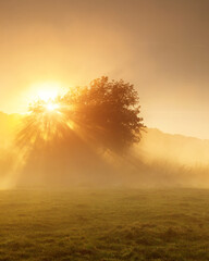Wall Mural - the foggy morning