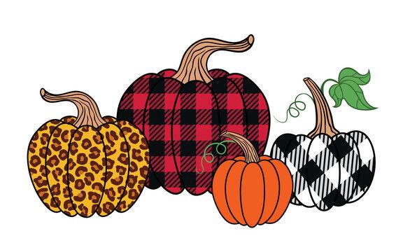 . Set of diverse pumpkins. Leopard, orange and buffalo plaid pumpkin..Happy Thanksgiving . Harvest season. Vector illustration. Clip Art.