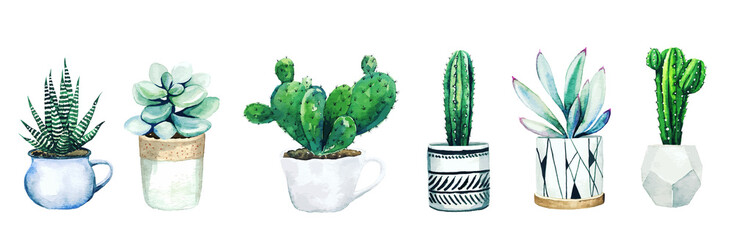 Set of six potted cactus plants and succulents