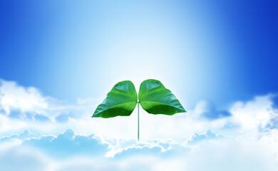 青空と雲と双葉の芽