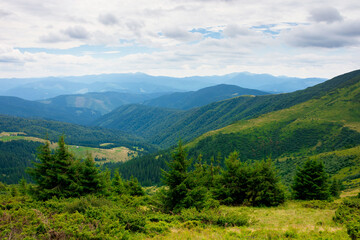 summer landscape of valley in mountains. trees and green meadows on rolling hills. black ridge in the distance. beautiful nature of carpathians. cloudy sky