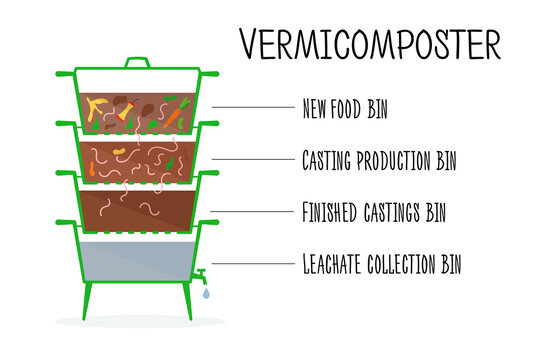 Vector illustration of vermicomposter structure. Concept of recycling, zero waste. Worms compost design. Composting organic waste by earthworms.