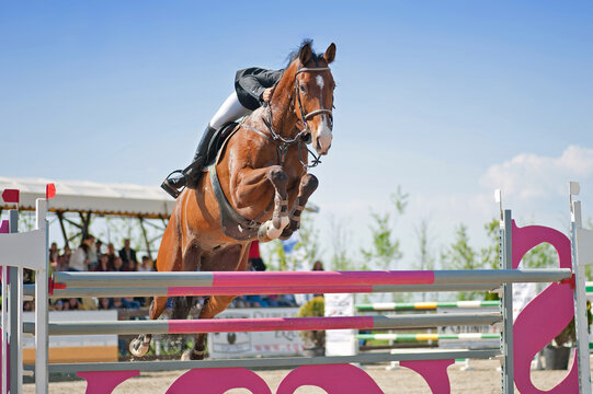 Equestrian sport: Rider on bay horse in jumping show