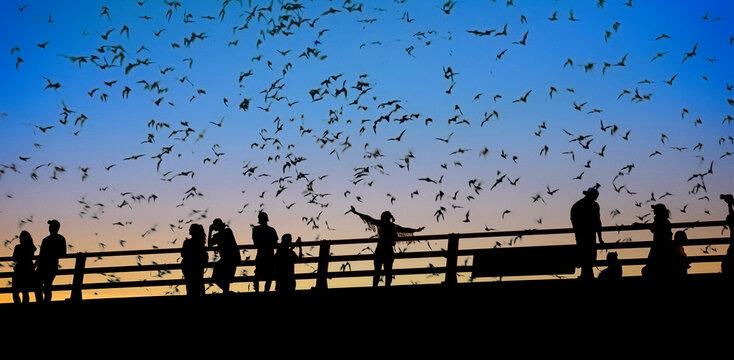 Bats flying over Congress Bridge in Austin, TX