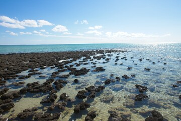Scenic panoramic view of Stromatolites at World Heritage Area Hamelin Pool, Shark Bay, Western Australia, with blue sky and horizon as copy space.