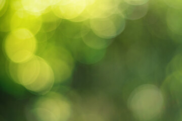 Wall Mural - Natural outdoors bokeh background in green and yellow tones, Blurred green tree leaf background with bokeh
