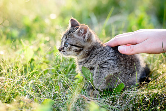 A woman's hand stroking a small kitten sitting in the grass