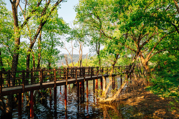 Geumgwang Lake wooden deck walkway with green forest in Anseong, Korea