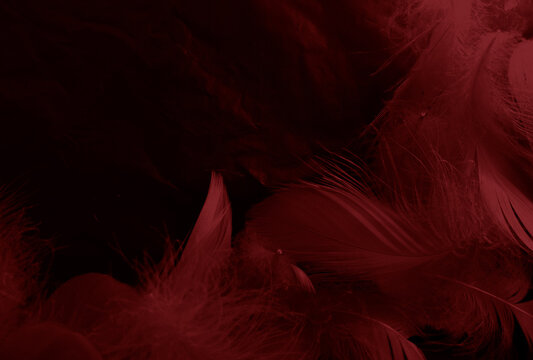 Beautiful abstract white and red feathers on black background and soft white feather texture on red pattern and red background, pink feather background, white banners