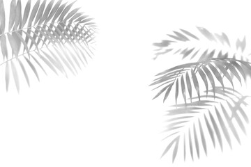 Wall Mural - The shadow of the palm leaves black and white monochrome image.