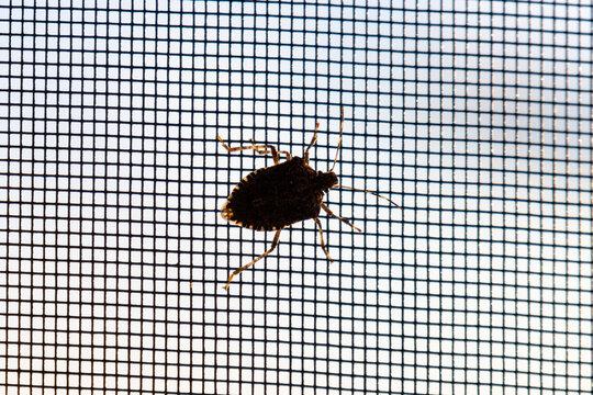 bug on a porch screen