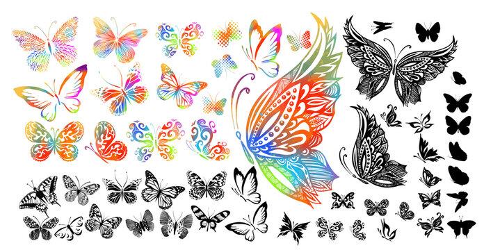 Set of multi-colored butterflies. Monochrome graceful butterflies. Vector illustration