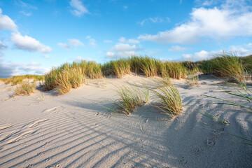 Wall Mural - Dune grass on the beach