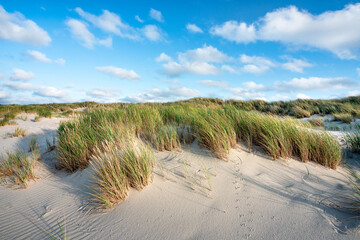 Wall Mural - Dunes at the beach at the northern coast of Germany