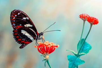 Printed kitchen splashbacks Butterfly Closeup beautiful butterfly in a summer garden