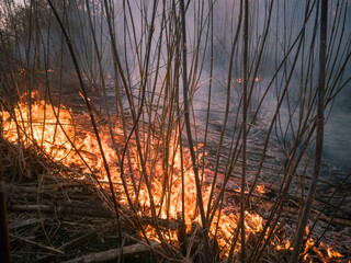 Forest fire and clouds of dark smoke. Flames spread over dry grass. Ecology disaster