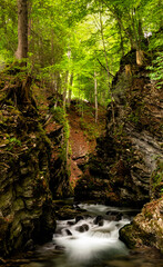 Wall Mural - idyllic small mountain stream in a deep ad narrow gorge in lush green springtime forest