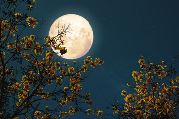 Wall Mural - Romantic night fantasy with full moon and yellow flower tree.