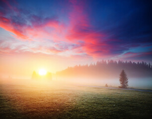 Wall Mural - Idyllic misty pasture in the sunlight. Locations place Durmitor National park, Montenegro, Balkans, Europe.