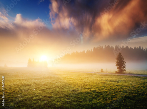 Wall mural Idyllic misty pasture in the sunlight. Locations place Durmitor National park, Montenegro, Balkans, Europe.