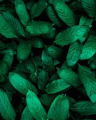 Deurstickers Planten closeup nature view of green leaf background, dark wallpaper concept.