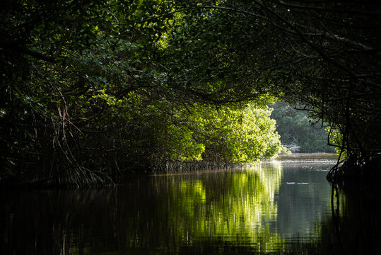 """A wonderful view from the mangrove forest at the big river at Celestun, """"Rio Lagartos Biosphere Reserve"""", Yucatan, Mexico (popular travel destination) - Wallpaper"""