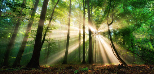 Papiers peints Pistache Luminous rays of sunlight shining through the mist and green foliage in a forest clearing, a panoramic landscape