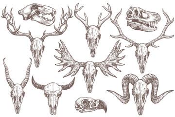 Vector collection of hand drawn animals skulls. Sketch skulls of eagle, dinosaur t-rex, lion, antelope, sheep, deer, elk, moose and buffalo. Engraved set of skeletons