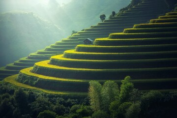 Beautiful Terraced rice fields in Sapa