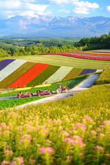 Shikisai no oka, the famous tourist attraction in Biei town, Colorful garden with variety of flowers in Hokkaido, Japan