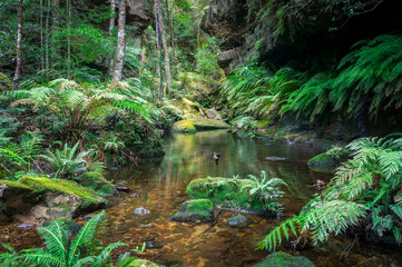 Tropical rainforest landscape with water and green ferns