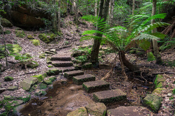 Hiking in rainforest. Hiking trail with ferns and small pond