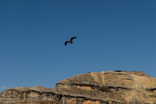 Rapace en vol dans le Parc National de l'Isalo - Madagascar.