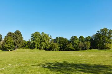 Grüne Wiese im Park mit Bäumen vor einem blauen Himmel Fotoväggar