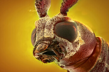 Printed roller blinds Macro photography Longhorn beetle extreme close up