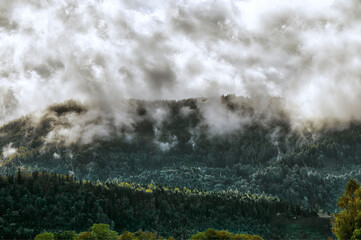 Fototapete - Photo of beautiful moody misty green coniferous forests in Alps
