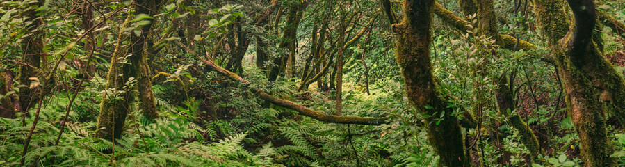 Anda Forest in Tenerife, Canary Islands