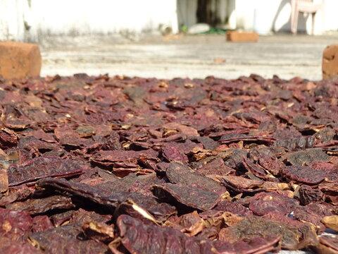 Acacia concinna spreaded evenly for sun dry