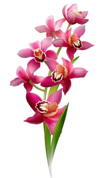 Beautiful pink lily flowers on a white background - perfect for a background or wallpaper