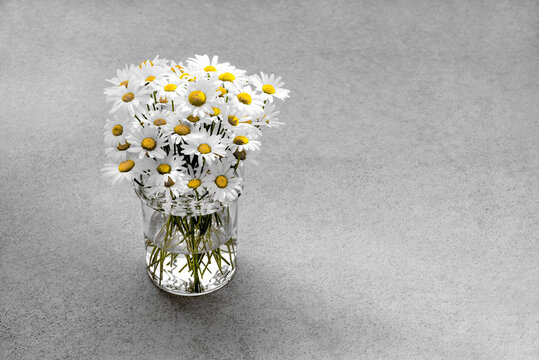 Daisies in a glass vase on concrete background.