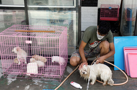An Iraqi man wears a protective face mask, following the outbreak of the coronavirus disease (COVID-19), as he washes a dog at a pet-care shop in Baghdad's Adhamiya district