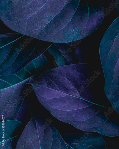 Wall mural closeup tropical green leaves nature in the garden and dark tone background concept