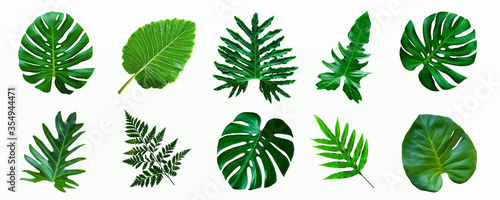 Wall mural set of green monstera palm and tropical plant leaf isolated on white background for design elements, Flat lay