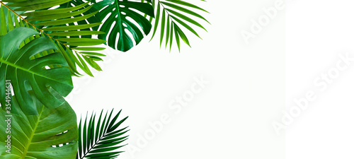 Wall mural Green leaves nature frame layout of tropical plant bush (monstera, palm, philodendrons, ferns) on white background, flat lay