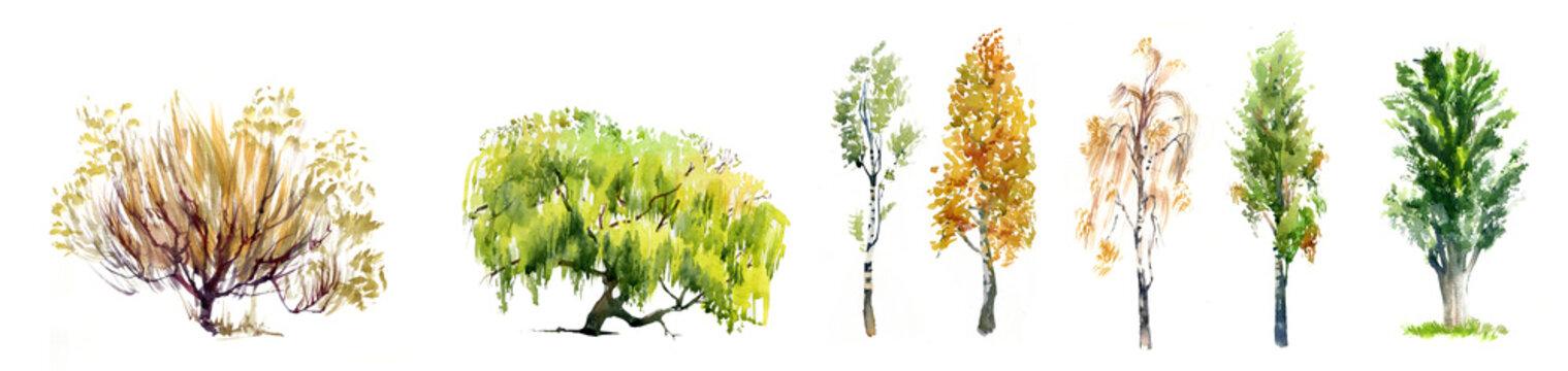 Set of realistic trees illustration isolated on white.Set of realistic trees illustration isolated on white