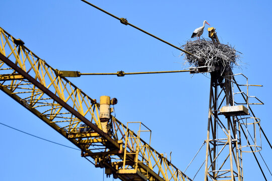 A white stork is seen on a nest built atop a crane in Torre d'Isola, near Pavia
